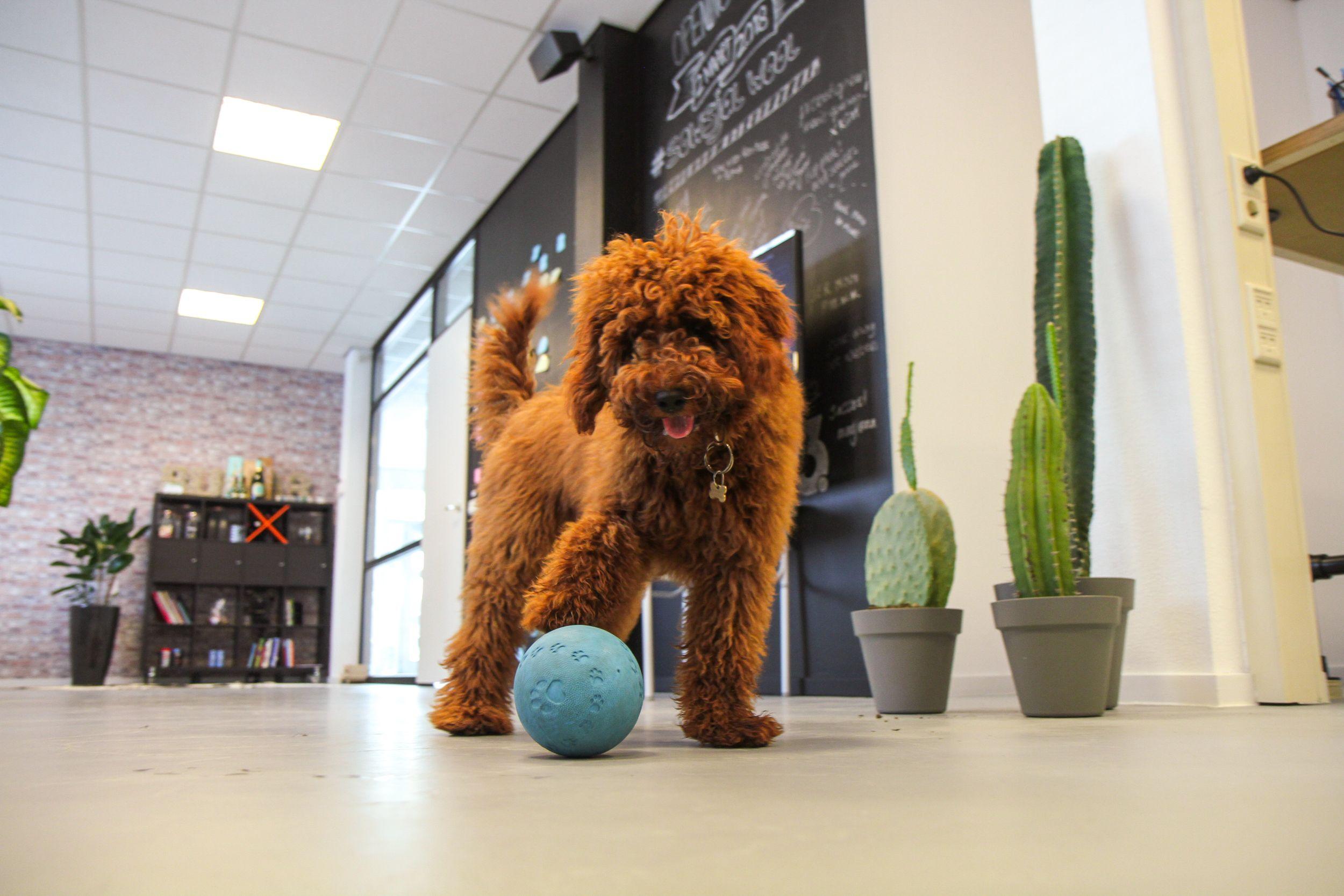 Sammie the officedog