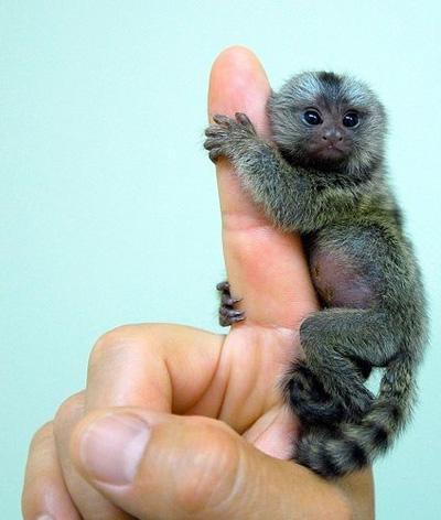 Baby aap